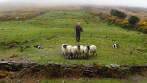 A Sheep Farmer and His Flock-Mugdha Karmarkar