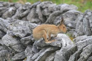 Hare. Eamonn Brennan