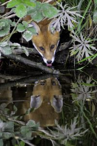 Thirsty Work-Chris Howes