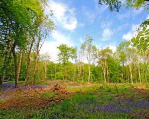 Jenkinstown Wood. Eamonn Brennan