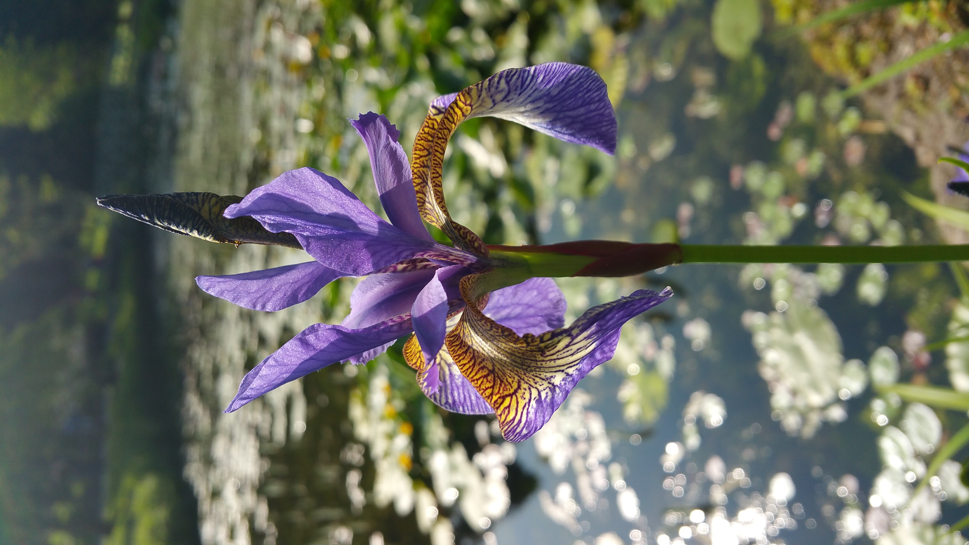National Biodiversity Week 2020