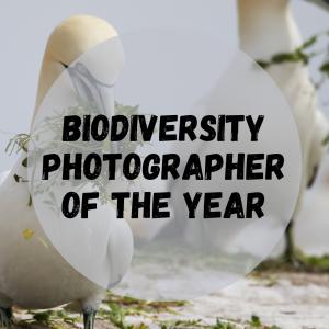 Biodiversity Photographer of the Year - deadline