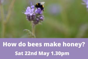 How do bees make honey? – Online event @ Online