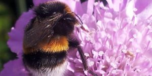 Pollinator Planting - Sponsored by Galway County Council @ Online