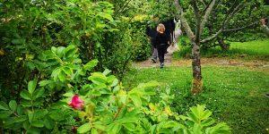 Biodiversity Day: Botanists Walk and Talks @ The Organic Centre
