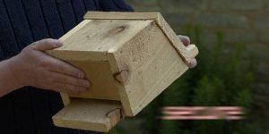 Virtual Bat Box Building @ Online