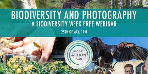Biodiversity and Photography - A free Biodiversity Week webinar @ Online