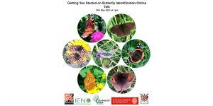Getting You Started with Butterfly Identification - Free Online talk @ Online